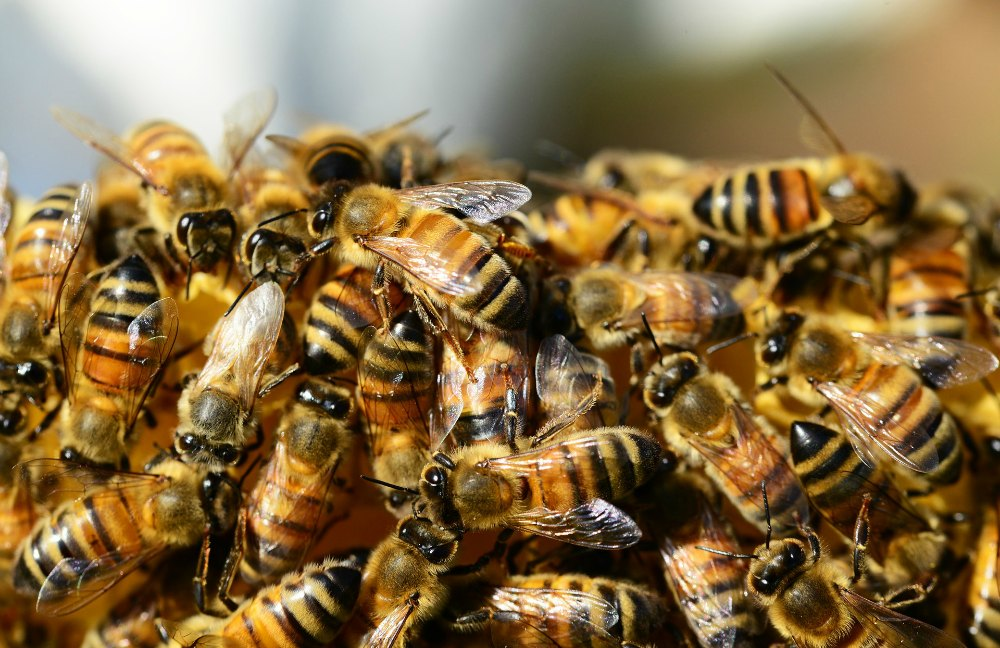 Managing Working Capital: worker bees